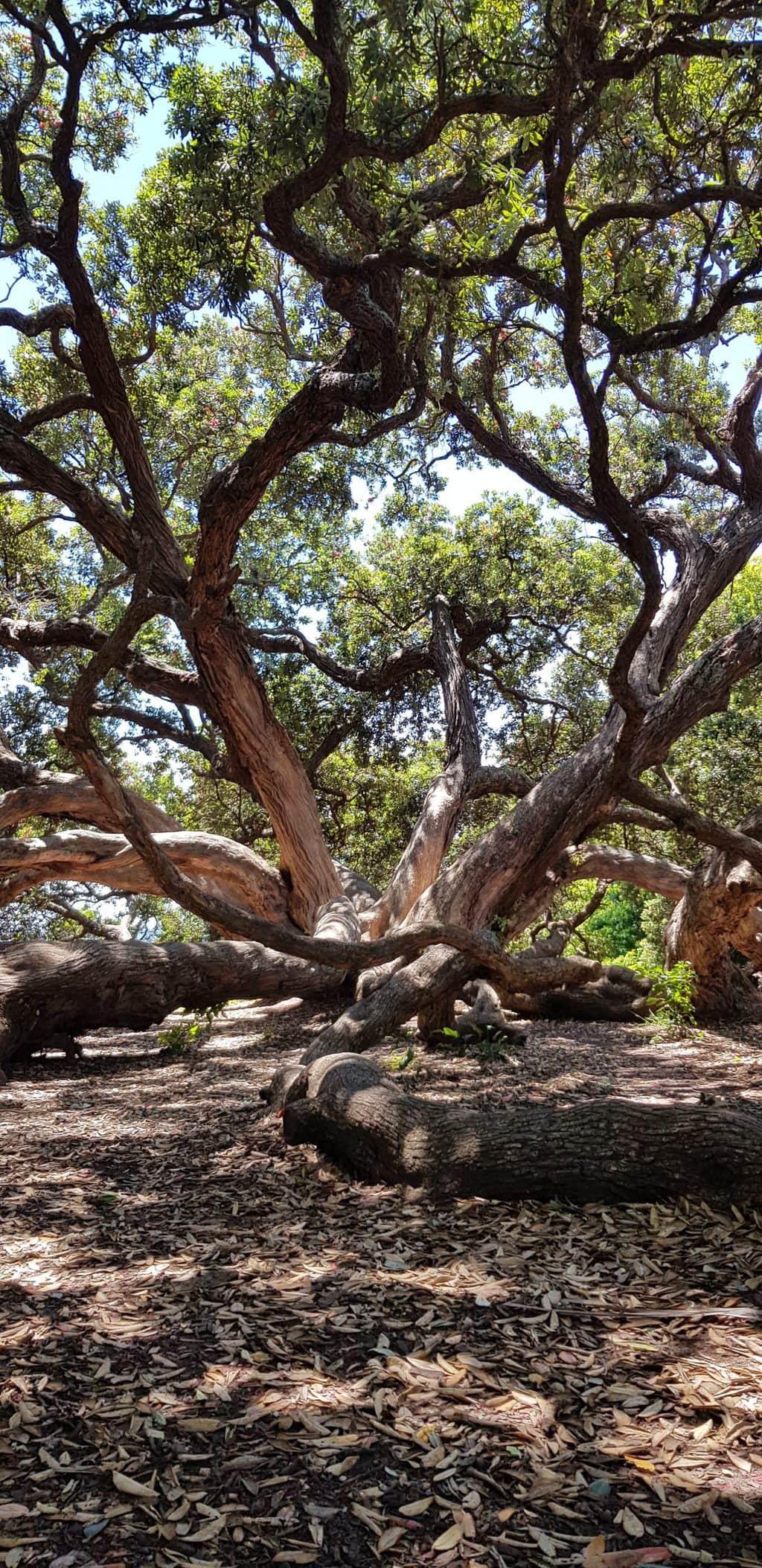 auckland vegan guide tree